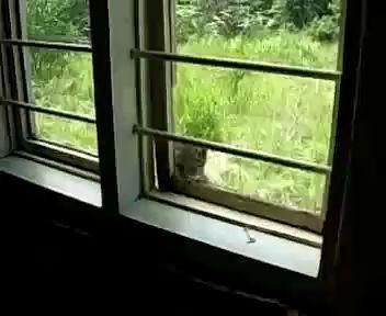 Смышленый проворный котяра