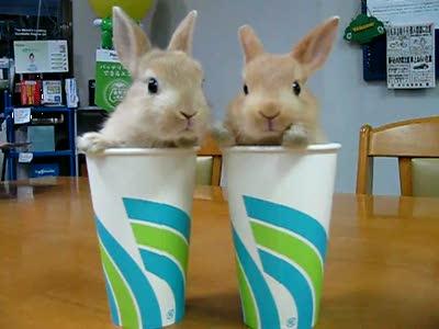 Кролики двойняшки 2