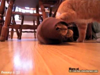 Котейки тоже помогают друг другу в беде