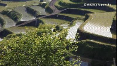 Рисовые террасы в Карацу. Япония