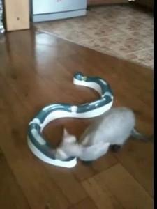 Прикол для кота