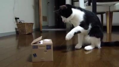 Жесткий троллинг кота