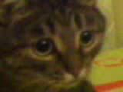 Кот Васька проникся искусству