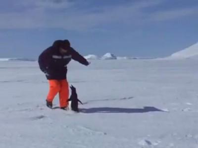 Осторожно: опасный пингвин