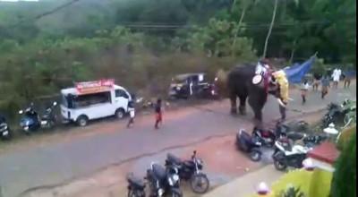Слон психанул