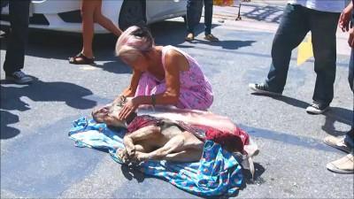 В Паттайе арестован убийца собаки