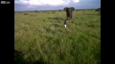 Пьяный смельчак против слона
