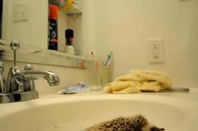 Ёжик и зубная щётка