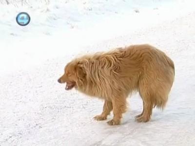 Уральский Хатико (Собака Сонька)