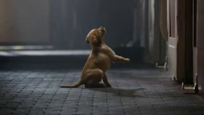 "Budweiser Super Bowl XLVIII Commercial -- ""Puppy Love"""