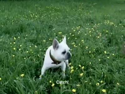 Собака ест чипсы и улыбается