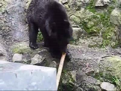 Кунг фу Медведь 2