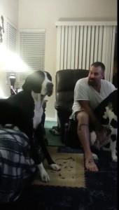 Собака спорит с хозяином