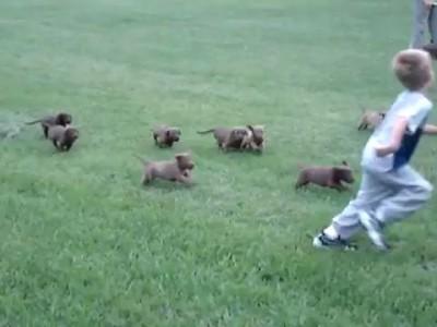 Нападение стаи собак на ребенка