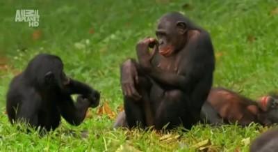 Суть женской логики обезьяны