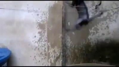 Котэ покоряет стенку