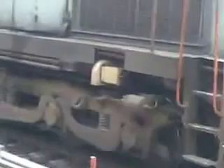 Lucky Dog Under Train ! Amazing Incident