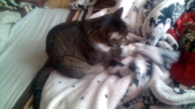 Кот приготавливает себе постель