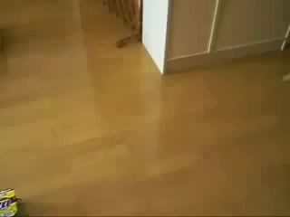 кот и коробки