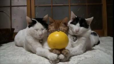 Смертельные трюки для котов. Дрессировка или..