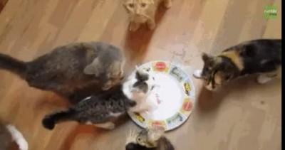 Издевается над котами.