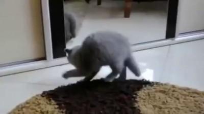 Приколы животные 2014!!!ЛУЧШИЕ ВИДЕО! | Awesome funny video animals!!!2014!