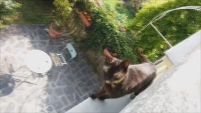 Кот альпинист