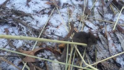два_мышь