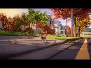 похождения кота 1 частьь