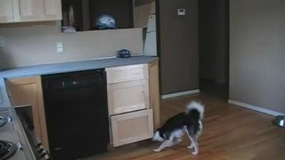Мега умный пёс