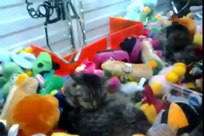 Бедный котэ и дебилы!