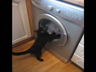 Стирально-машинный кот