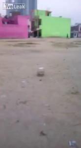 Тузик взрывотехник. Индия.