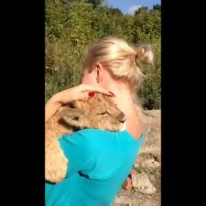 Алиса Вокс и львенок