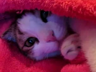 Трудовые будни кота Вильяма