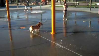 Собачка любит водичку