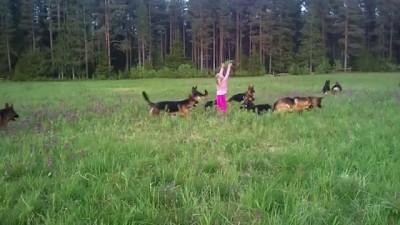 Девочка и собачки