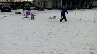 Пост про девочку и её пса.