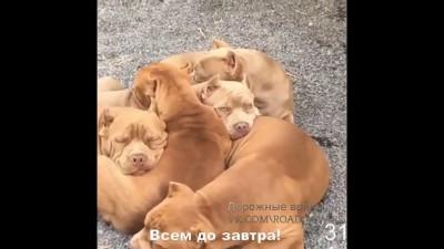 Всем спать
