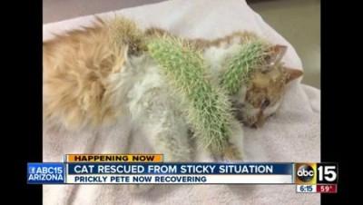 Кота спасли от игл кактуса