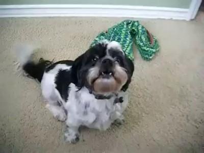 Собачка с необычным голосом
