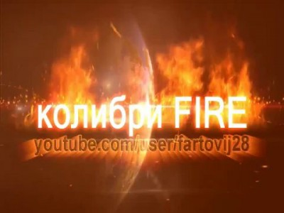 Колибри FIRE#7 бьет- значит любит ?'часть 2' beats-means love?' part 2'