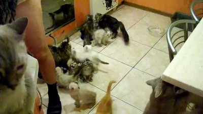 Кормление кучи голодных котов