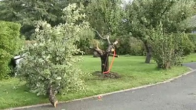 Пьяный лось застрял на дереве.