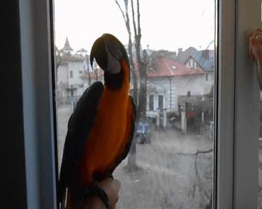 Попугай ара разговаривает