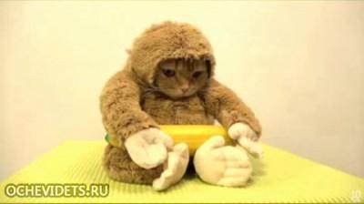 кошка и банан