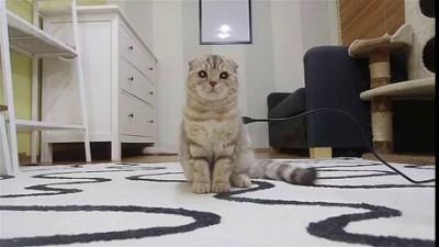Заряди кота