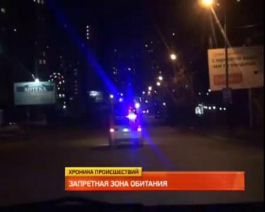Бурого медведя застрелили в Хабаровске