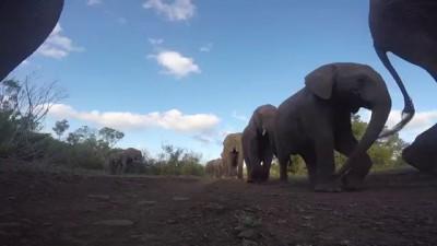 Слониха снимала