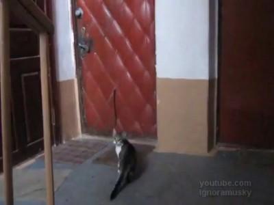 Кот пришел домой